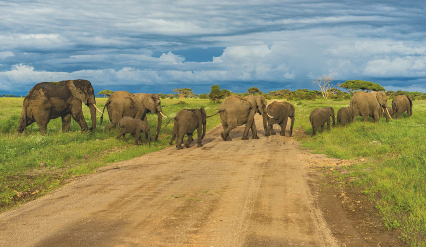 Mentorship and Elephants